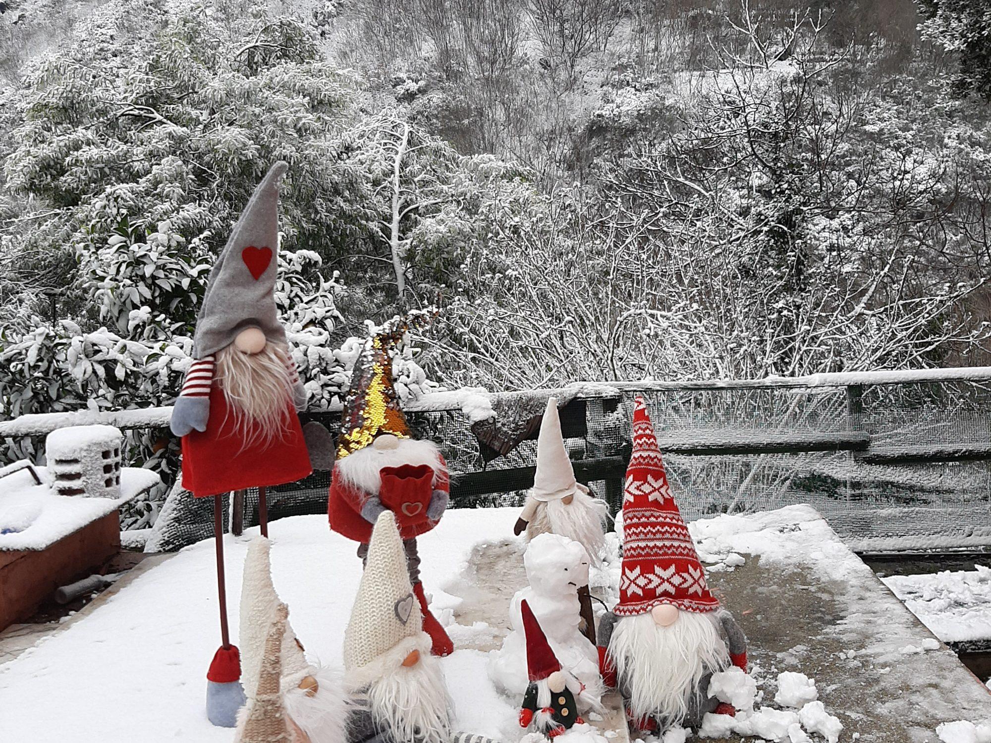 gnomi sulla neve
